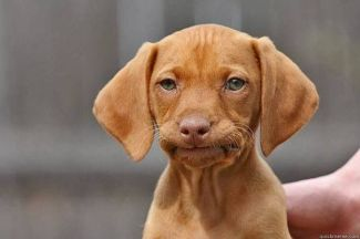 Disappointed-Dog-Face-04.jpg